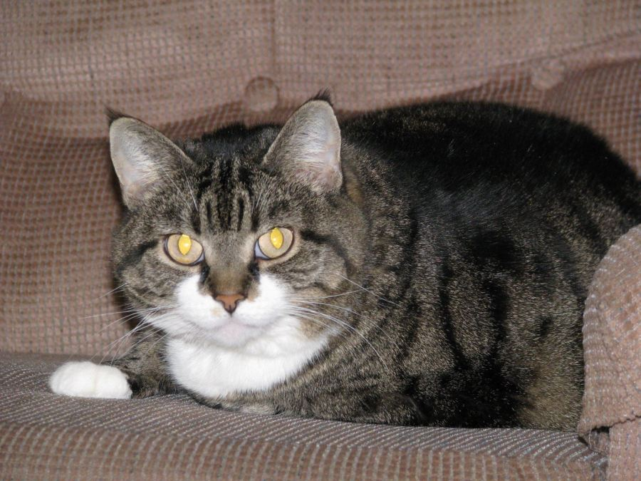Emma, beloved cat (1999-2014)